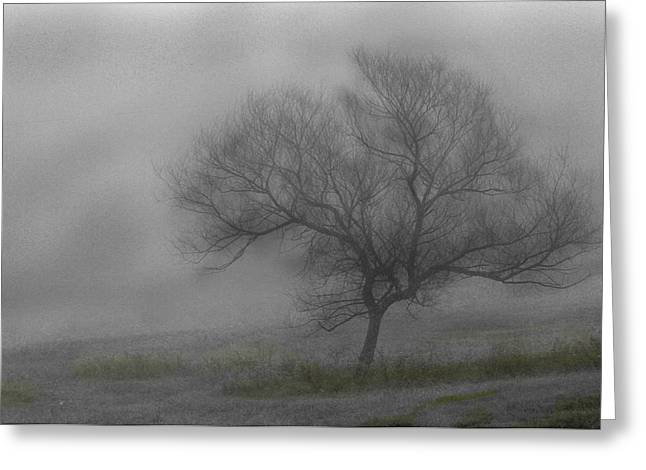 Wind Swept Tree Greeting Card
