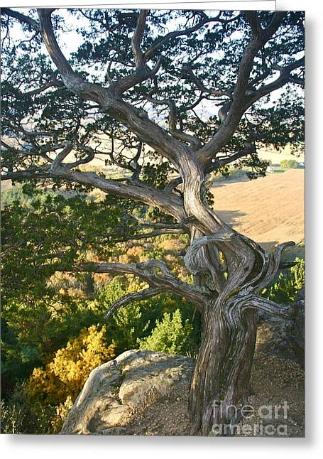 Wind Twisted Tree Greeting Card by Joan McArthur