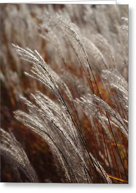 Windblown Grass Greeting Card