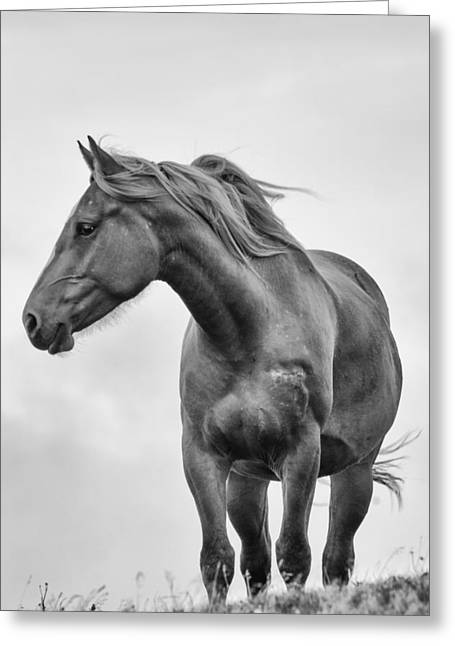 Windblown Horse Greeting Card by Tracy Munson