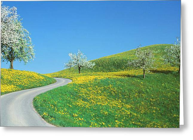 Winding Road Canton Switzerland Greeting Card by Panoramic Images