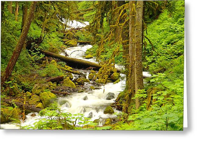 Winding Through The Forest Greeting Card by Jeff Swan