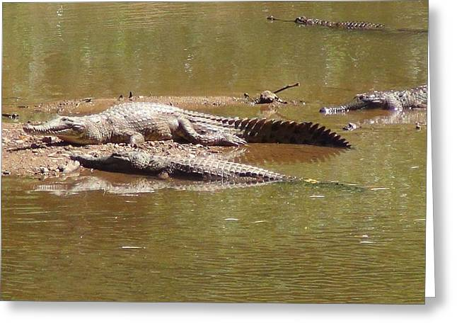 Windjana Crocodiles Greeting Card
