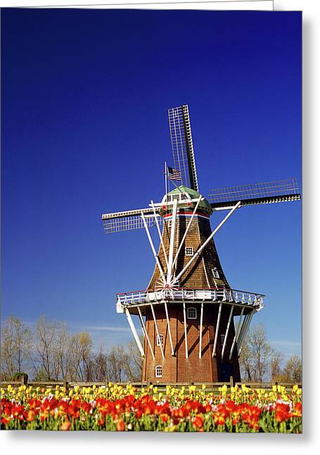 Windmill In A Tulip Field, De Zwaan Greeting Card by Panoramic Images