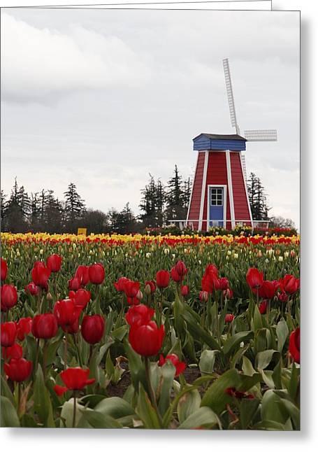 Windmill Red Tulips Greeting Card by Athena Mckinzie