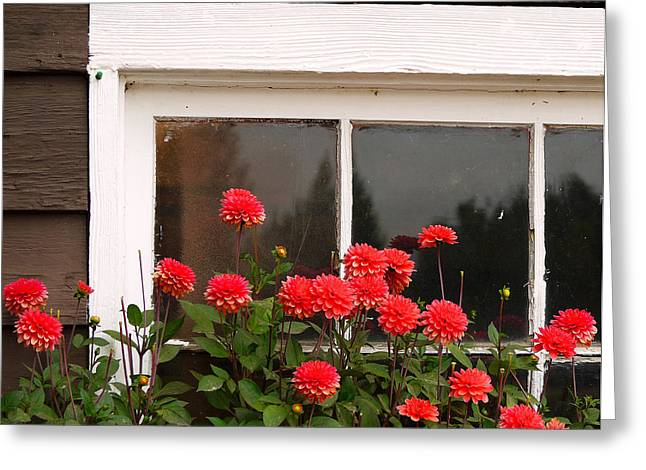 Greeting Card featuring the photograph Window Box Delight by Jordan Blackstone