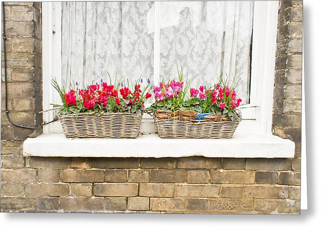 Window Boxes Greeting Card by Tom Gowanlock
