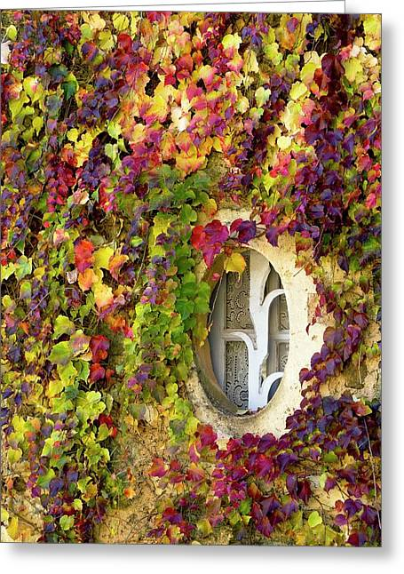 Window Covered In Virginia Creeper Greeting Card