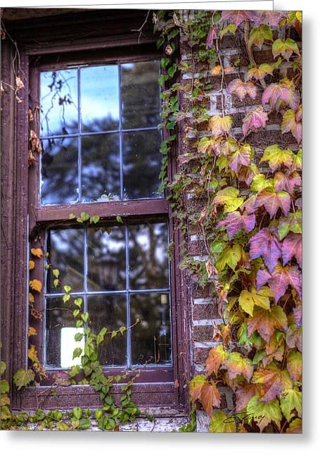 Window In Mayslake Ivy Greeting Card