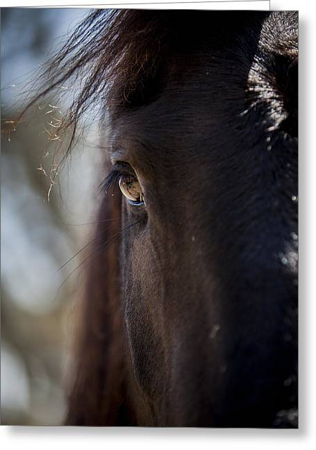 Window Into The Gentle Giant's Soul Greeting Card by Amber Kresge