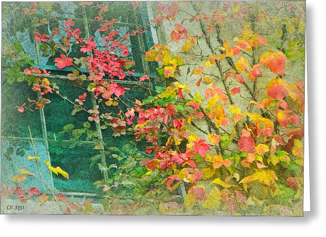 Window Of Autumn Greeting Card by Lorella  Schoales