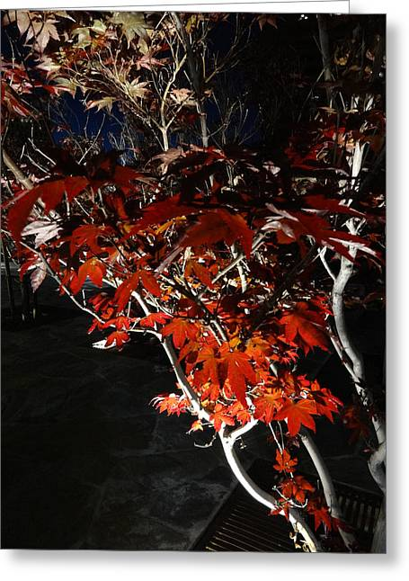 Window Of Sky And Flamed Leaves In My Eye Greeting Card by Kenneth James
