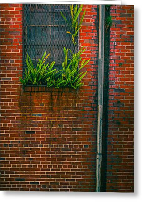 Window Weeds Greeting Card