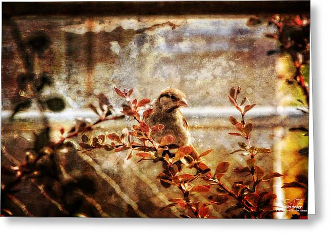 Window Wren Greeting Card by Dan Quam