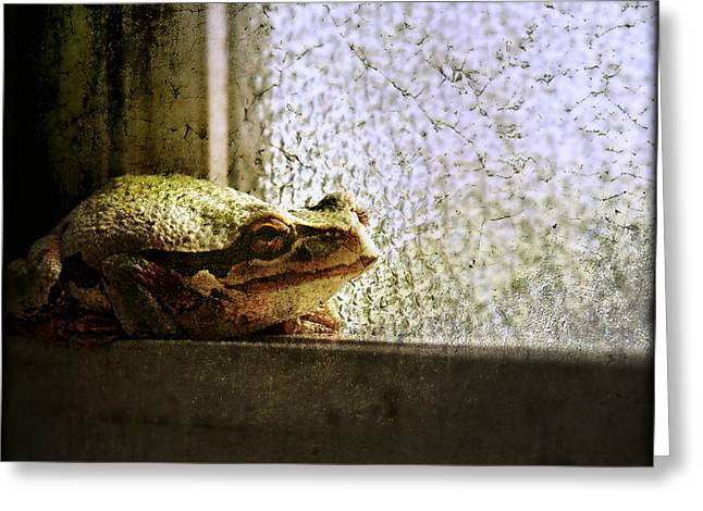Windowsill Visitor Greeting Card