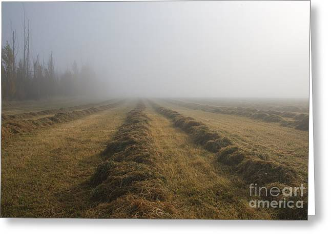 Windrows Greeting Card by Mike  Dawson