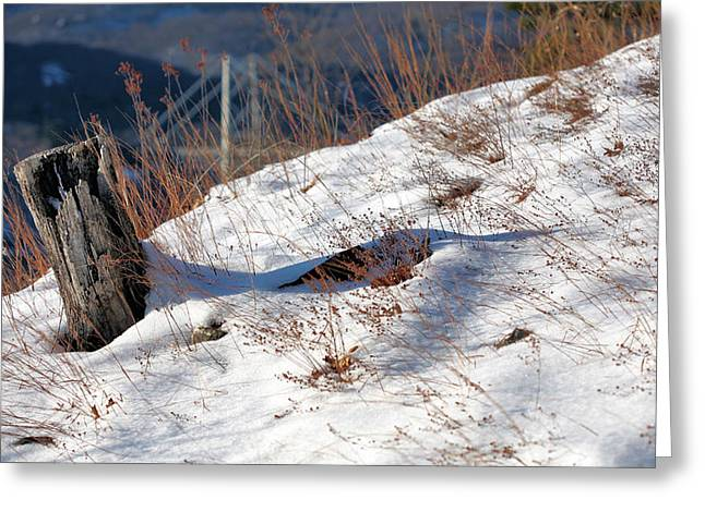 Windswept  Greeting Card by JC Findley