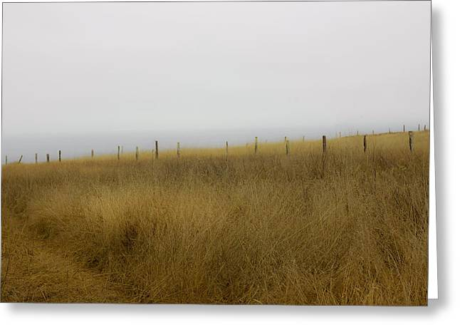 Windswept  Greeting Card by Kandy Hurley