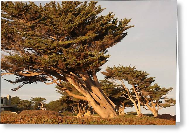 Windswept Pines Greeting Card by Art Block Collections