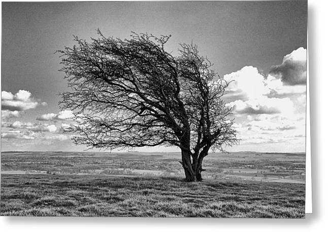 Windswept Tree On Knapp Hill Greeting Card