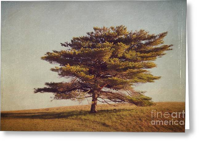 Windward Tree Greeting Card by Katherine Gendreau
