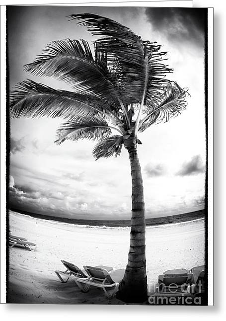 Windy Palm Greeting Card by John Rizzuto