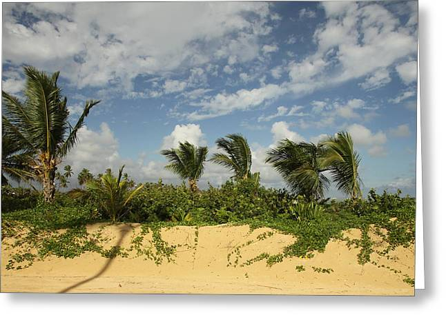 Windy Palms Greeting Card