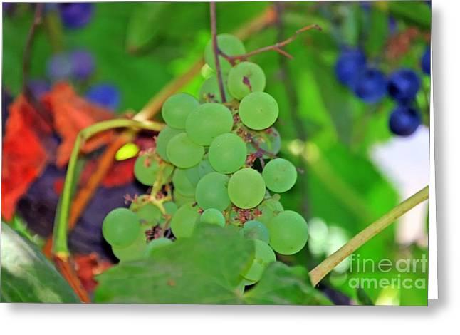 Wine Beginnings Greeting Card