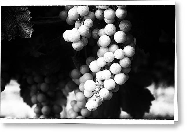 Wine Grapes In Mono Greeting Card