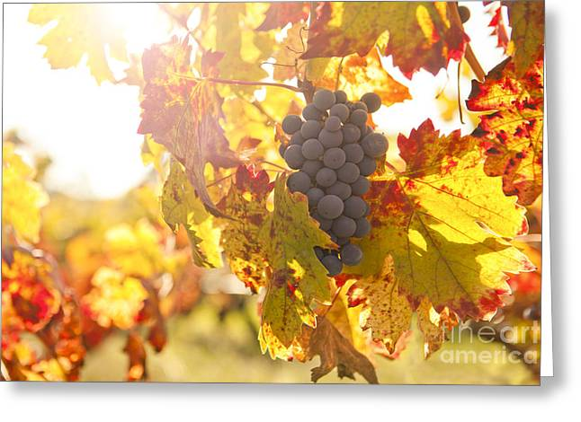 Wine Grapes In The Sun Greeting Card by Diane Diederich