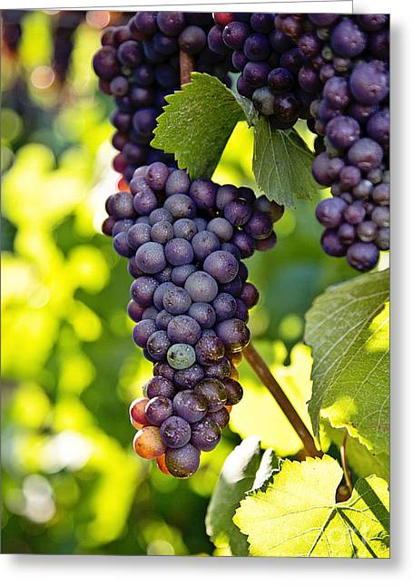 Wine Grapes Greeting Card by Scott Pellegrin