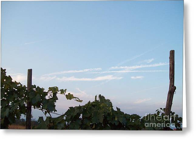Wine Yards In Loppiano Greeting Card