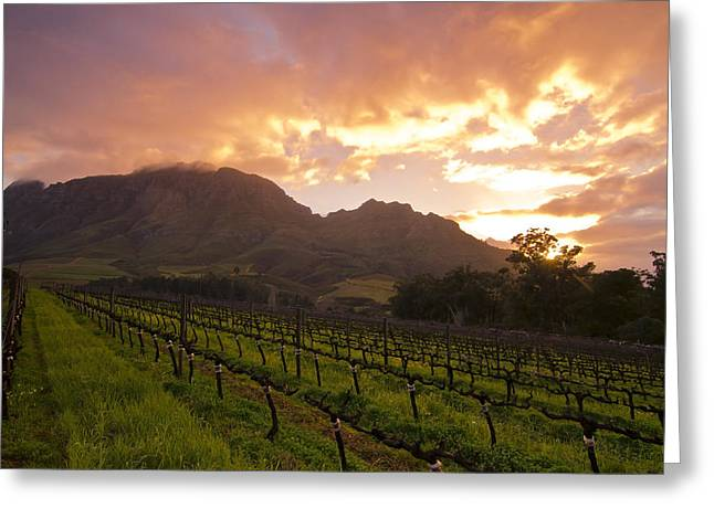 Wineland Sunrise Greeting Card