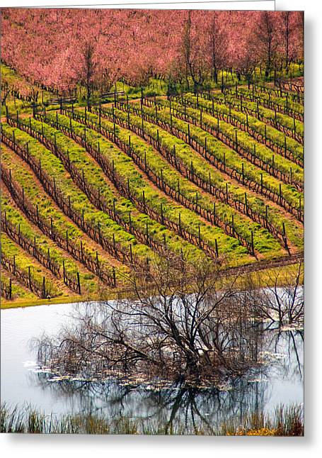 Winelands In Springtime Greeting Card by Dennis Cox WorldViews