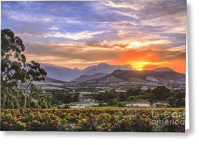 Winelands Sunset Greeting Card by Jennifer Ludlum