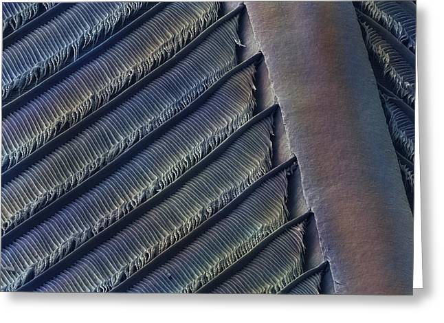 Wing Feather Detail Of Swallow Sem Greeting Card by Science Photo Library