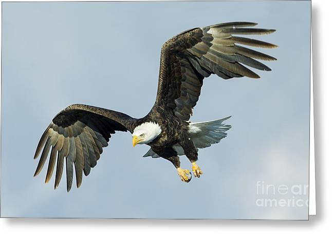 Wing Flare Greeting Card by John Blumenkamp