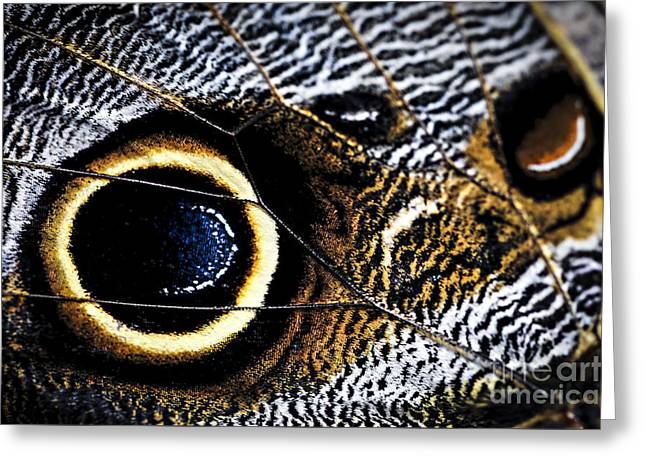 Wing Of Owl Butterfly  Greeting Card by Elena Elisseeva