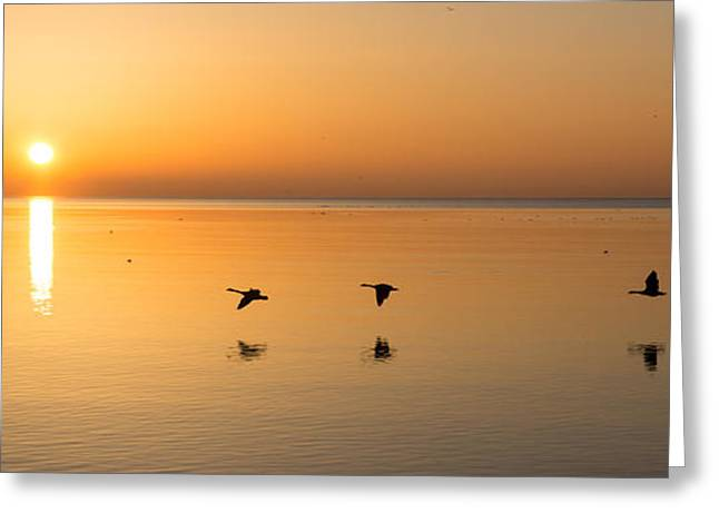 Greeting Card featuring the photograph Wings At Sunrise by Georgia Mizuleva