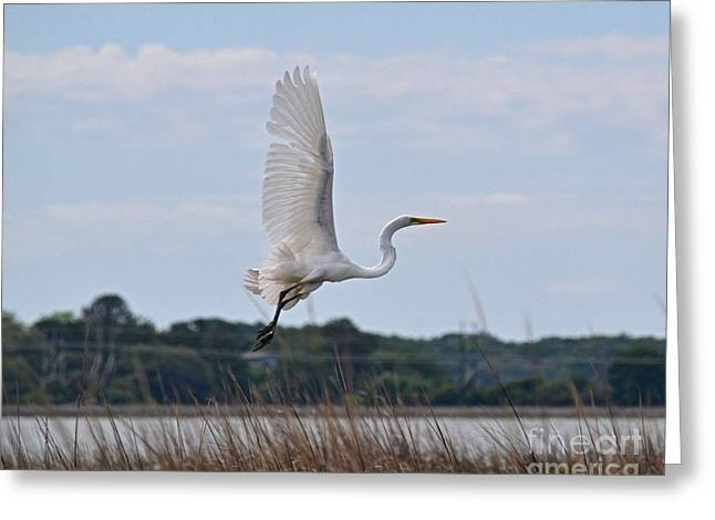 Greeting Card featuring the photograph Wings by Carol  Bradley