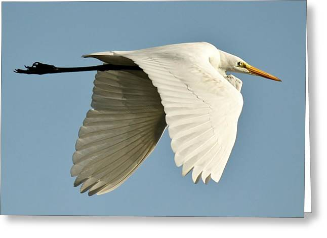 Wings Down Greeting Card by Paulette Thomas