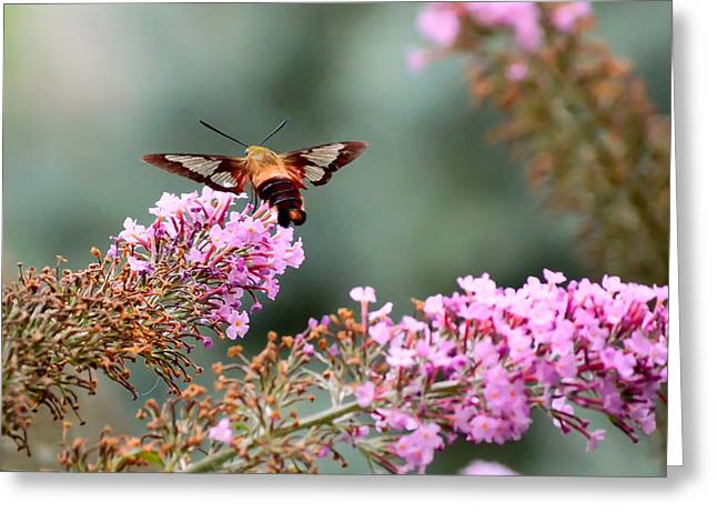 Greeting Card featuring the photograph Wings In The Flowers by Kerri Farley