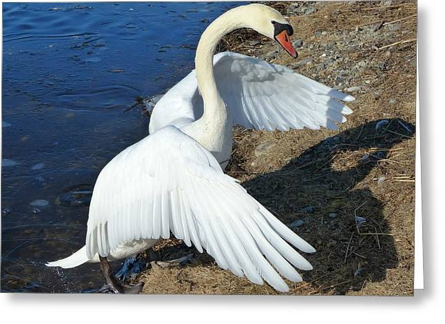 Wings Of A Swan Greeting Card