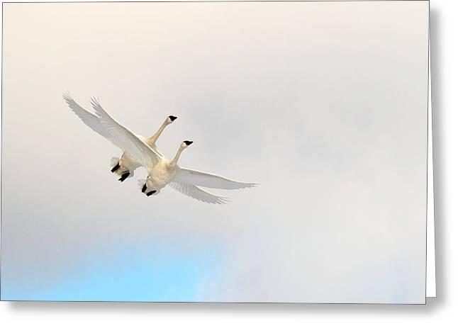 Wings Of Angels Greeting Card