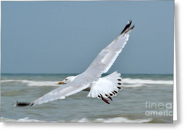 Greeting Card featuring the photograph Wings Of Freedom by Simona Ghidini