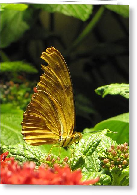 Wings Of Gold Greeting Card