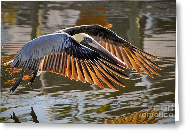 Wings Of Gold Greeting Card by Quinn Sedam