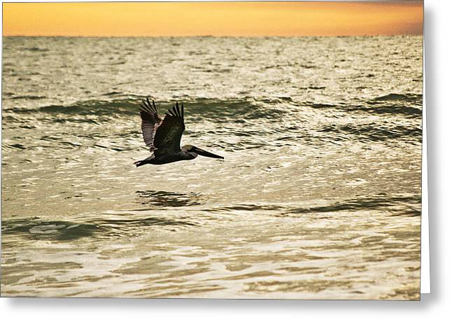 Wings Over Water Wil 270 Greeting Card