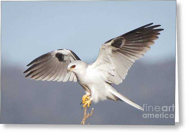 Wingspan Greeting Card by Alice Cahill