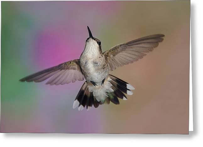 Wingspread Greeting Card